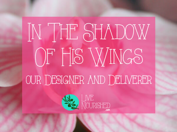 In The Shadow of His Wings: Our Designer and Deliverer