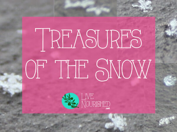 Have you found the treasures of the snow? Here's what we can learn from snowflakes about life and purity...