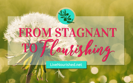From Stagnant To Flourishing {Guest Post by Elizabeth Johnson}